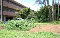 施設横の畑