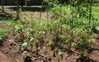 手づくり栽培畑